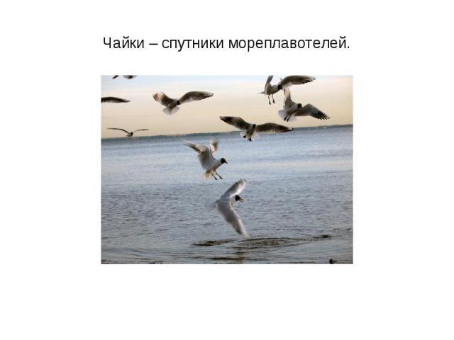 Чайки – спутники мореплавотелей.