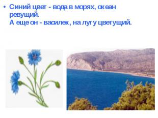 Синий цвет - вода в морях, океан ревущий.А еще он - василек, на лугу цветущий.