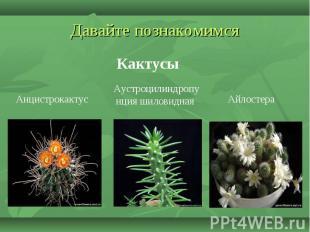 Давайте познакомимся Кактусы Анцистрокактус Аустроцилиндропунция шиловидная Айло
