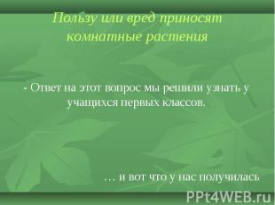Пользу или вред приносят комнатные растения - Ответ на этот вопрос мы решили узн