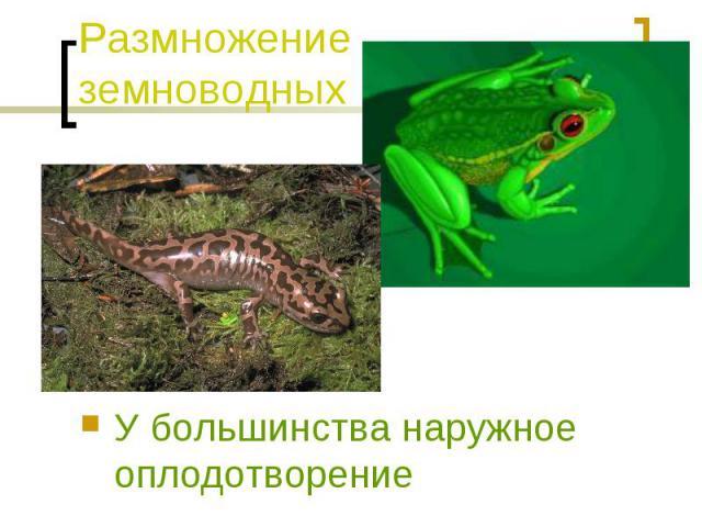 Размножение земноводных У большинства наружное оплодотворение