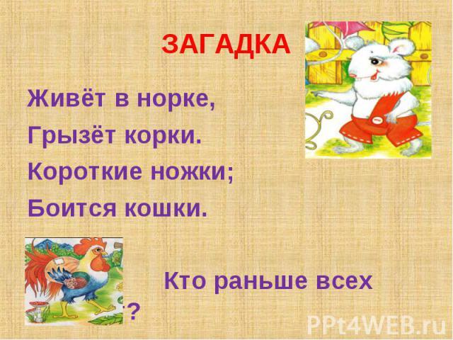 ЗАГАДКА Живёт в норке,Грызёт корки.Короткие ножки;Боится кошки. Кто раньше всех встаёт?