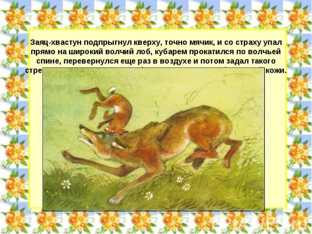 Заяц-хвастун подпрыгнул кверху, точно мячик, и со страху упал прямо на широкий волчий лоб, кубарем прокатился по волчьей спине, перевернулся еще раз в воздухе и потом задал такого стрекача, что, кажется, готов был выскочить из собственной кожи.