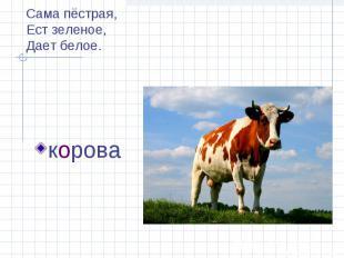 Сама пёстрая,Ест зеленое,Дает белое. корова