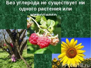 Без углерода не существует ни одного растения или животного...