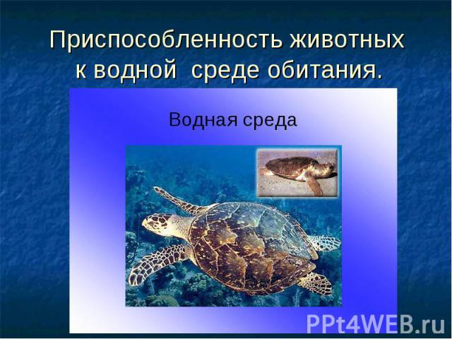 Приспособленность животных к водной среде обитания.