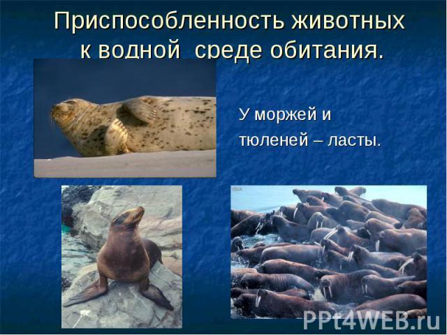 Приспособленность животных к водной среде обитания. У моржей и тюленей – ласты.