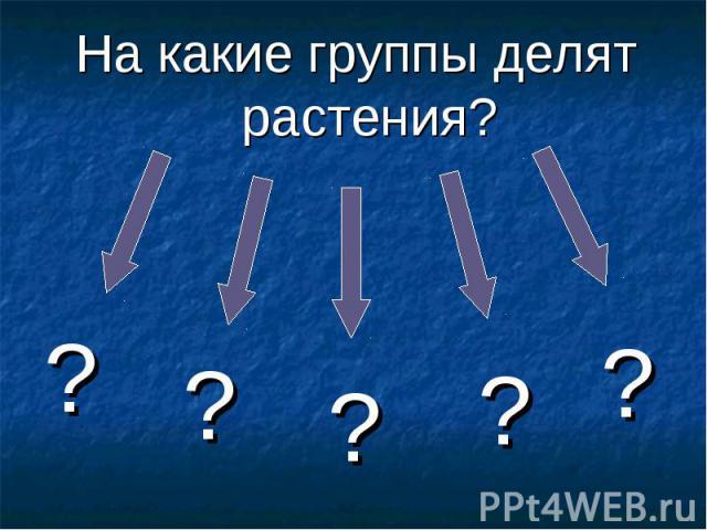 На какие группы делят растения?