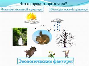 Что окружает организм? Факторы неживой природыФакторы живой природыЭкологические