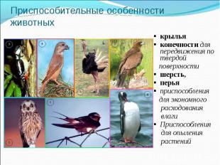 Приспособительные особенности животных крыльяконечности для передвижения по твер