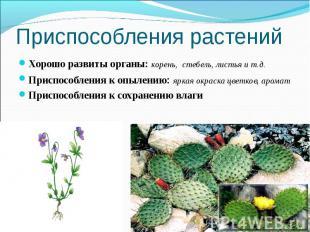 Приспособления растений Хорошо развиты органы: корень, стебель, листья и т.д.При