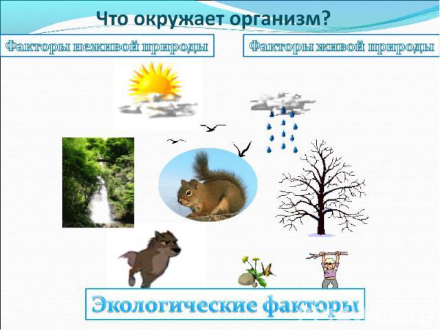 Что окружает организм? Факторы неживой природыФакторы живой природыЭкологические факторы