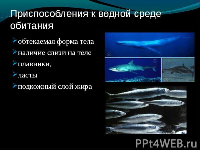 Приспособления к водной среде обитания обтекаемая форма теланаличие слизи на телеплавники,ластыподкожный слой жира