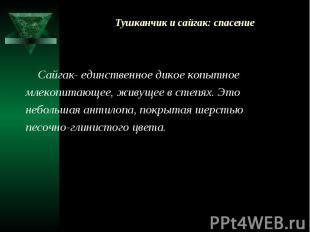 Тушканчик и сайгак: спасение Сайгак- единственное дикое копытное млекопитающее,