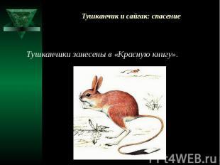Тушканчик и сайгак: спасение Тушканчики занесены в «Красную книгу».