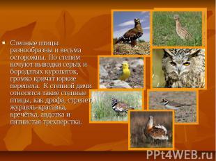 Степные птицы разнообразны и весьма осторожны. По степям кочуют выводки серых и