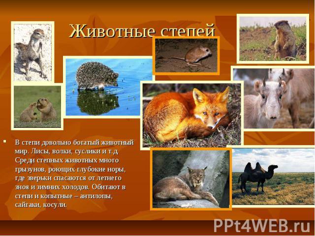 Животные степей В степи довольно богатый животный мир. Лисы, волки, суслики и т.д. Среди степных животных много грызунов, роющих глубокие норы, где зверьки спасаются от летнего зноя и зимних холодов. Обитают в степи и копытные – антилопы, сайгаки, косули.