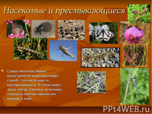 Насекомые и пресмыкающиеся Самые многочисленные представители животного мира степей – это насекомые и пресмыкающиеся. В степи живут жуки, пчёлы, бабочки, кузнечики, сверчки и конечно множество ящериц и змей.