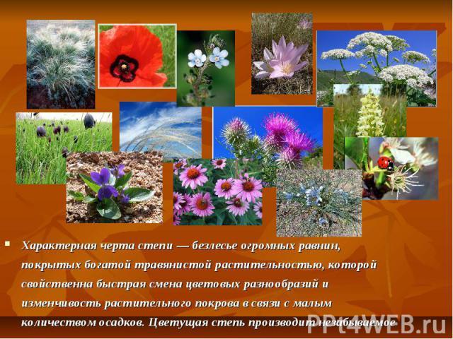 Характерная черта степи — безлесье огромных равнин, покрытых богатой травянистой растительностью, которой свойственна быстрая смена цветовых разнообразий и изменчивость растительного покрова в связи с малым количеством осадков. Цветущая степь произв…