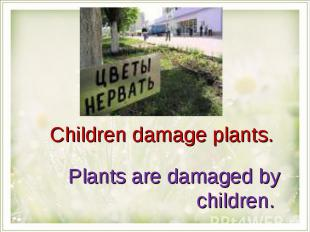 Children damage plants. Plants are damaged by children.