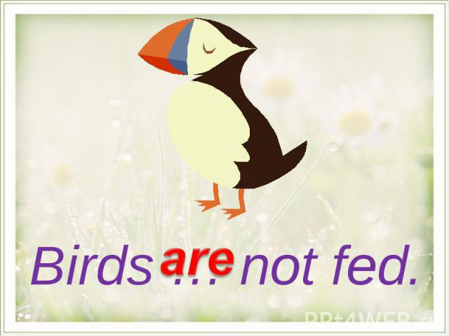 Birds … not fed.