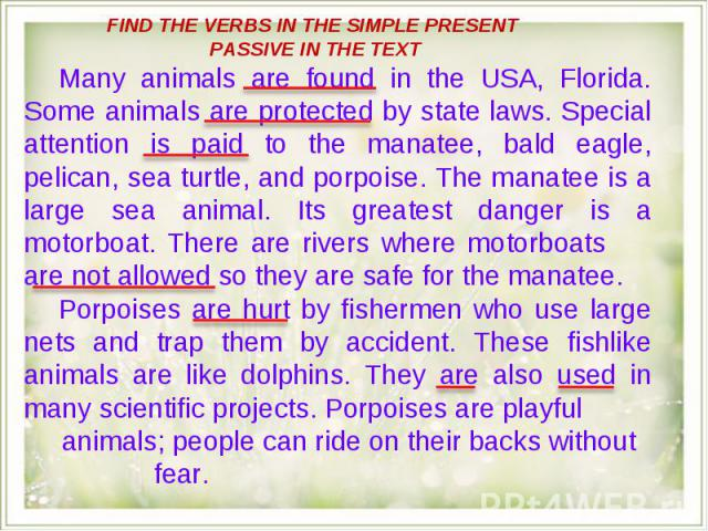 FIND THE VERBS IN THE SIMPLE PRESENT PASSIVE IN THE TEXT Many animals are found in the USA, Florida. Some animals are protected by state laws. Special attention is paid to the manatee, bald eagle, pelican, sea turtle, and porpoise. The manatee is a …