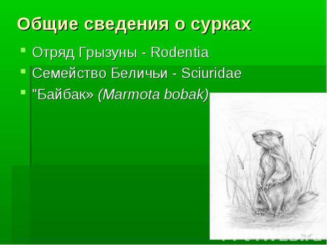 Общие сведения о сурках Отряд Грызуны - RodentiaСемейство Беличьи - Sciuridae