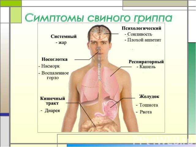 Симптомы свиного гриппа