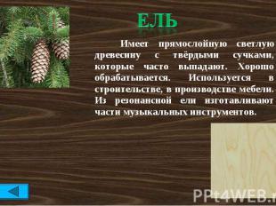 Ель Имеет прямослойную светлую древесину с твёрдыми сучками, которые часто выпад