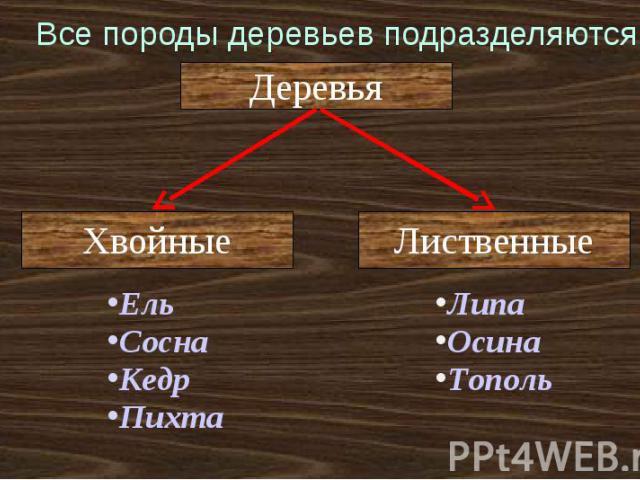 Все породы деревьев подразделяются: ЕльСоснаКедрПихтаЛипаОсинаТополь