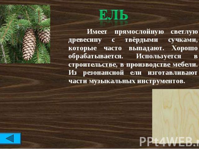 Ель Имеет прямослойную светлую древесину с твёрдыми сучками, которые часто выпадают. Хорошо обрабатывается. Используется в строительстве, в производстве мебели. Из резонансной ели изготавливают части музыкальных инструментов.
