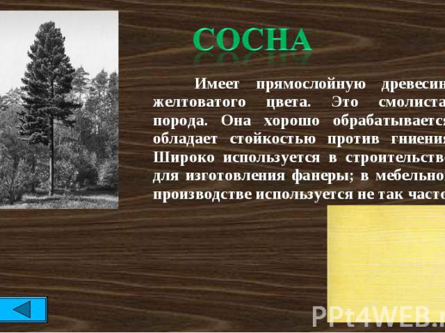 Сосна Имеет прямослойную древесину желтоватого цвета. Это смолистая порода. Она хорошо обрабатывается, обладает стойкостью против гниения. Широко используется в строительстве, для изготовления фанеры; в мебельном производстве используется не так часто.