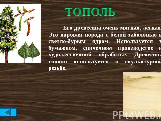 тополь Его древесина очень мягкая, легкая. Это ядровая порода с белой заболонью и светло-бурым ядром. Используется в бумажном, спичечном производстве и художественной обработке. Древесина тополя используется в скульптурной резьбе.