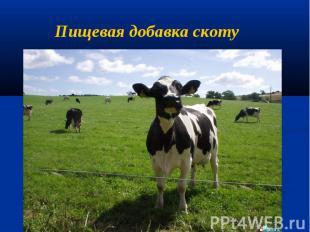 Пищевая добавка скоту