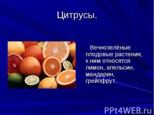 Цитрусы. Вечнозелёные плодовые растения, к ним относятся лимон, апельсин, мандар