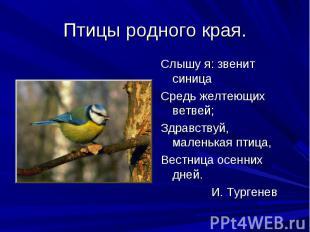 Птицы родного края. Слышу я: звенит синицаСредь желтеющих ветвей;Здравствуй, мал