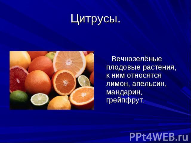 Цитрусы. Вечнозелёные плодовые растения, к ним относятся лимон, апельсин, мандарин, грейпфрут.