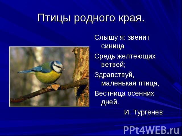 Птицы родного края. Слышу я: звенит синицаСредь желтеющих ветвей;Здравствуй, маленькая птица,Вестница осенних дней. И. Тургенев