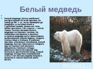 Белый медведь Белый медведь (Ursus maritimus) распространен по всей Арктике, на