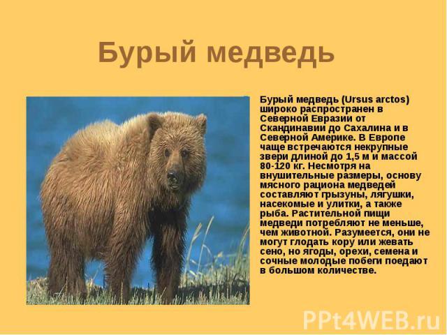 Бурый медведь Бурый медведь (Ursus arctos) широко распространен в Северной Евразии от Скандинавии до Сахалина и в Северной Америке. В Европе чаще встречаются некрупные звери длиной до 1,5 м и массой 80-120 кг. Несмотря на внушительные размеры, основ…