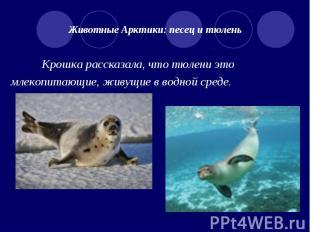 Животные Арктики: песец и тюлень Крошка рассказала, что тюлени это млекопитающие