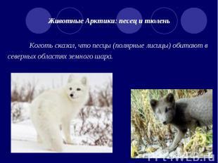 Животные Арктики: песец и тюлень Коготь сказал, что песцы (полярные лисицы) обит