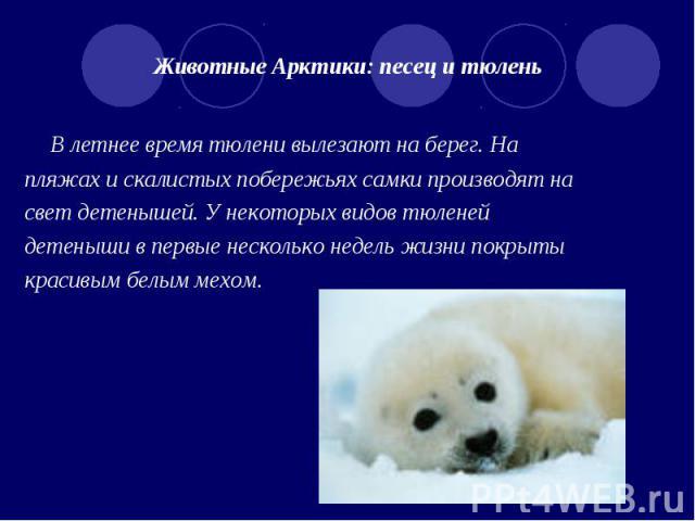 Животные арктики доклад 4 класс