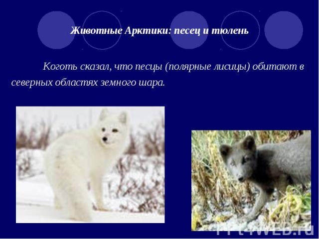 Животные Арктики: песец и тюлень Коготь сказал, что песцы (полярные лисицы) обитают в северных областях земного шара.