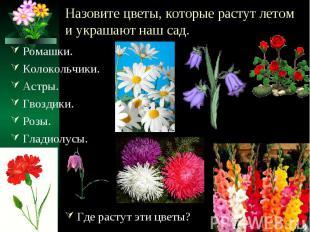 Назовите цветы, которые растут летом и украшают наш сад. Ромашки.Колокольчики.Ас