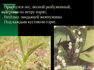 Проснулся лес, весной разбуженный,Деревья по ветру парят,Весёлых ландышей жемчуж