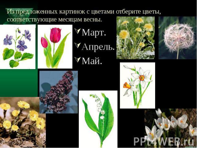 Из предложенных картинок с цветами отберите цветы, соответствующие месяцам весны. Март.Апрель.Май.