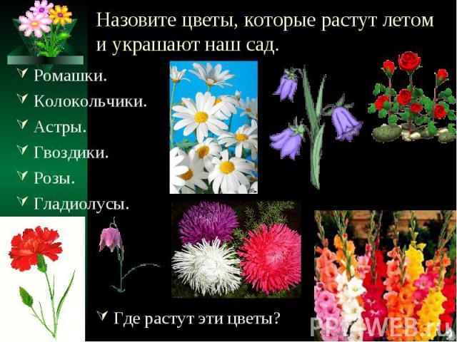 Назовите цветы, которые растут летом и украшают наш сад. Ромашки.Колокольчики.Астры.Гвоздики.Розы.Гладиолусы.Где растут эти цветы?