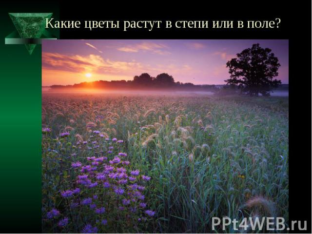 Какие цветы растут в степи или в поле?