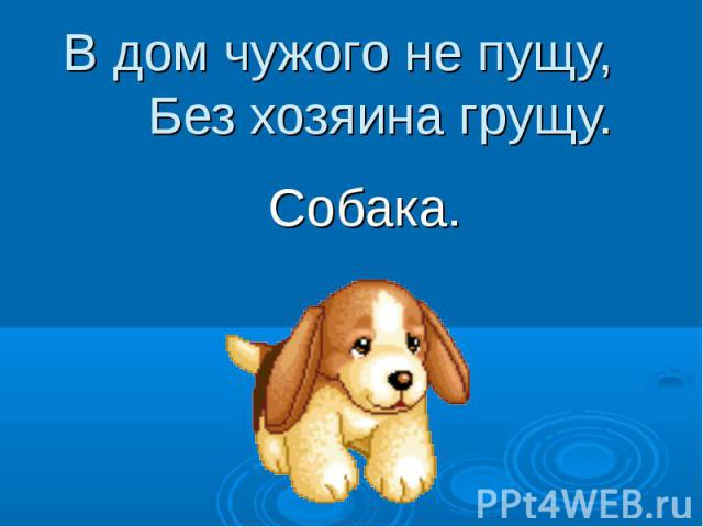 В дом чужого не пущу, Без хозяина грущу. Собака.